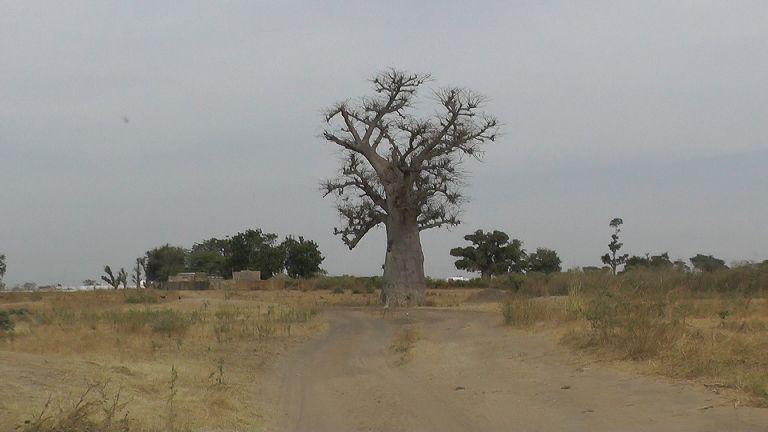 Senegal Landschaft