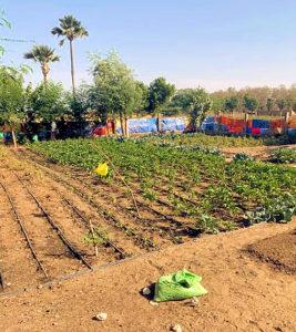 Gemüsegarten in Ndianda